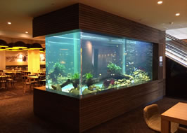 Aquarium Design Specialist Mike Murphy Architectural